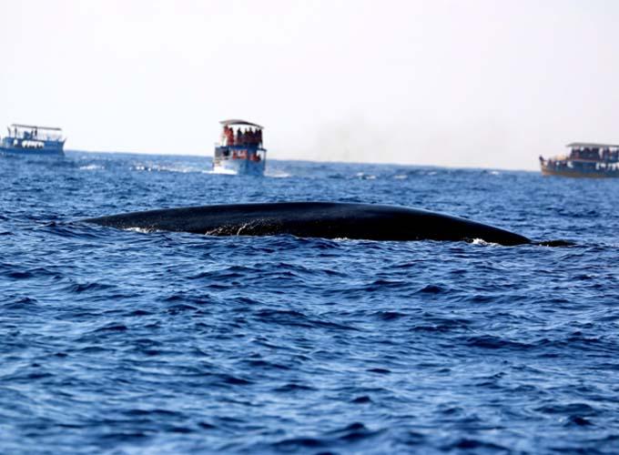 Day 3 -  Snorkelling in Mirissa