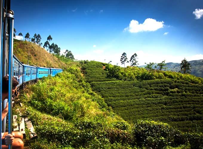 Day 8 -  Explore in and around Nuwara Eliya