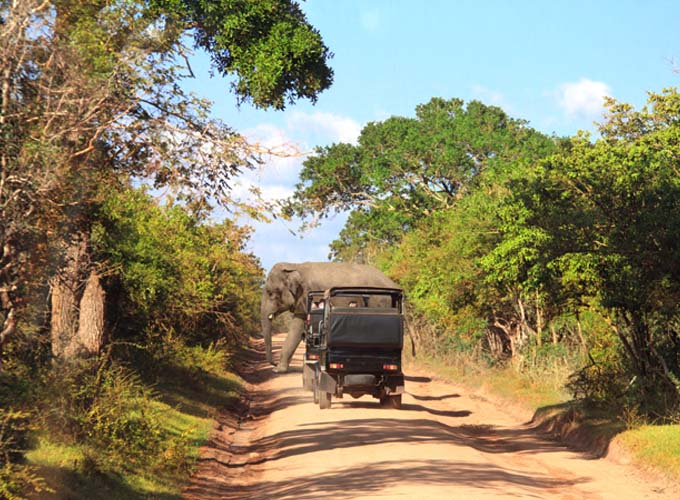 Day 10 -  Go on a morning game drive at Yala National Park